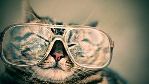 cat wearing Cheap Prescription Glasses