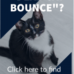 What is a Dead Cat Bounce