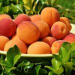 peaches 1522680 640