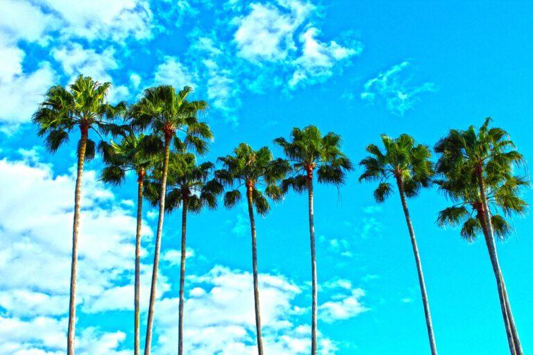 palm trees gc473b9dec 1280